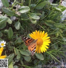Fauna und Flora entlang des Weges
